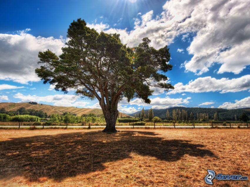 albero solitario, nuvole, montagna, cielo, HDR