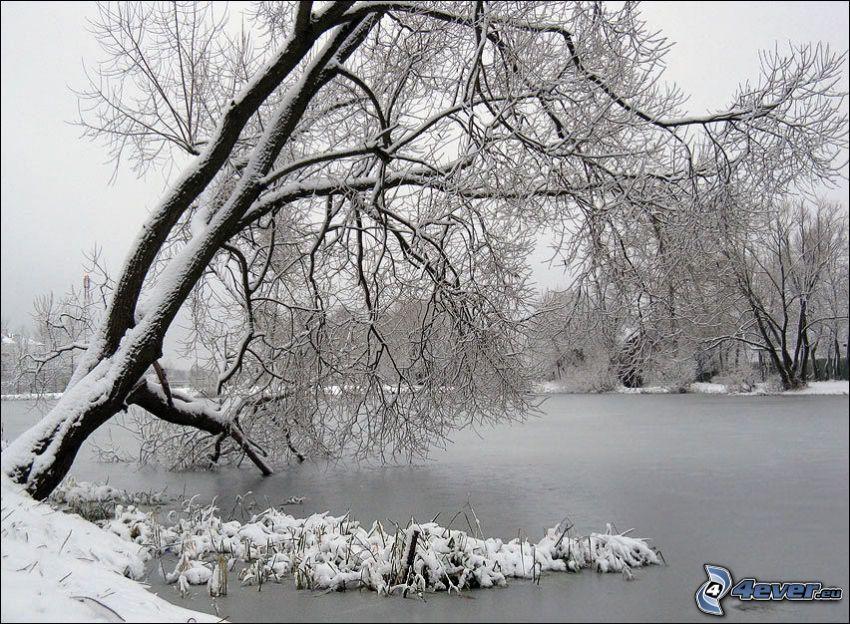albero sopra il fiume, neve, ghiaccio