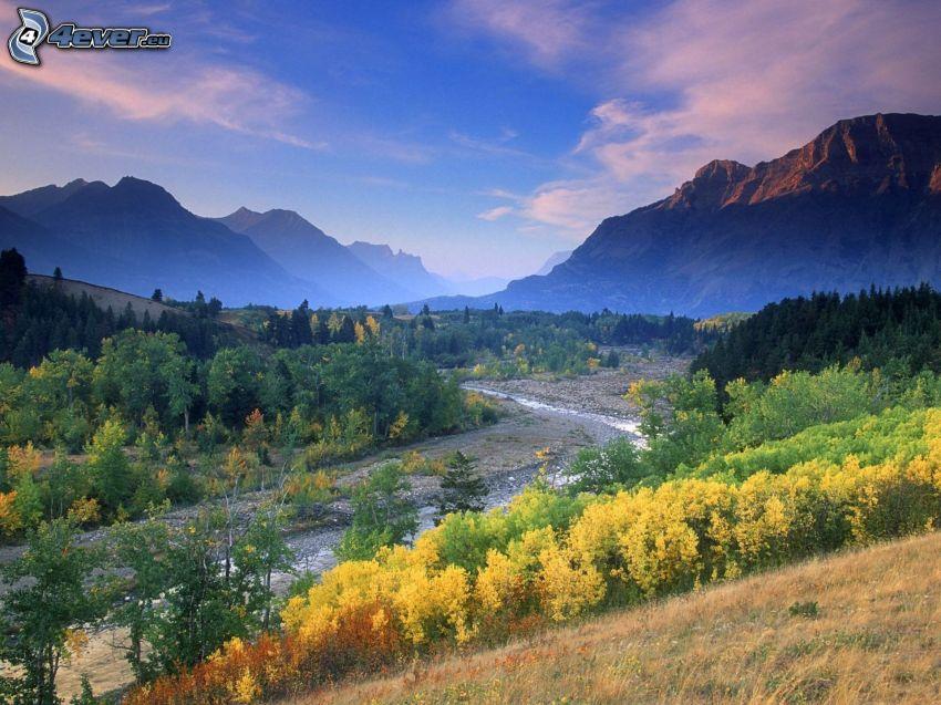 Alberta, Canada, ruscello, montagne, foresta, alberi gialli, autunno