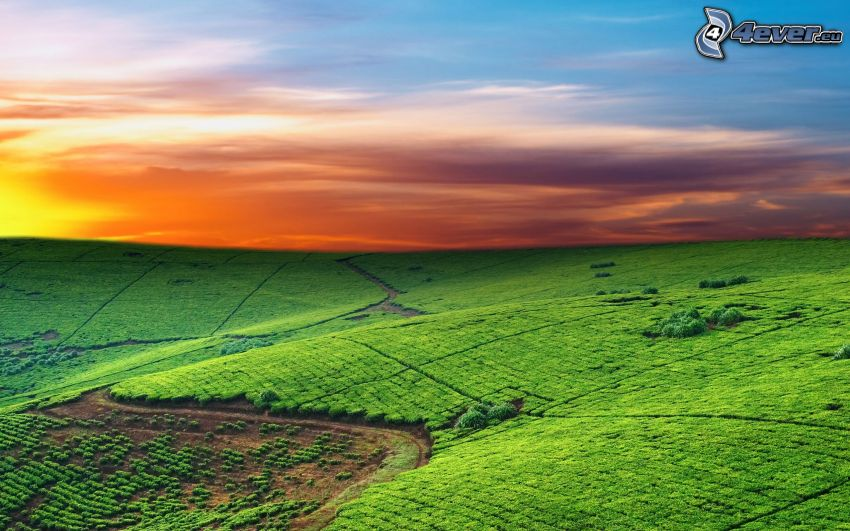 campi, cielo arancione