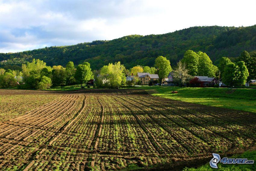 campo, paesaggio primaverile