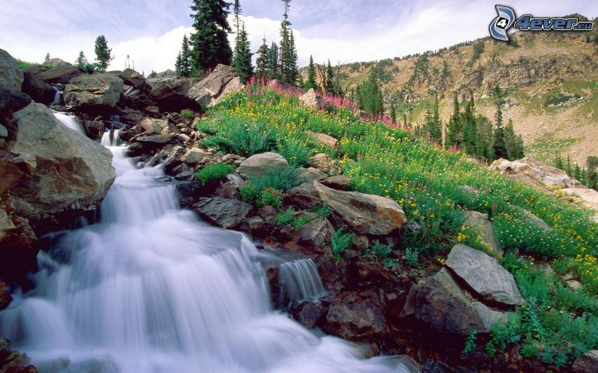 cascata, rocce, fiori di campo