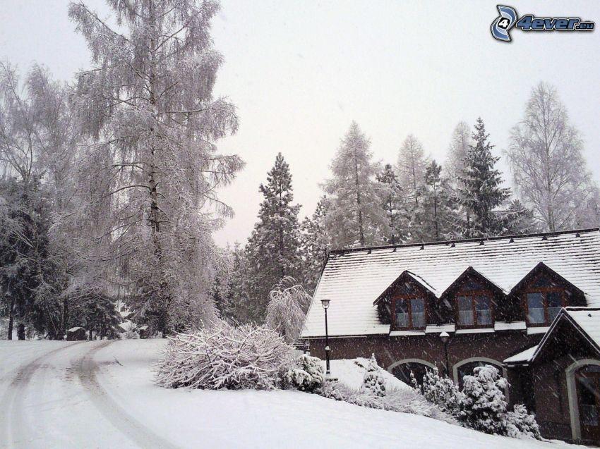 chalet coperto di neve, strada innevata, alberi coperti di neve, neve, inverno, arbusti