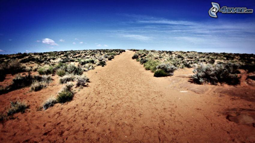 deserto, l'erba