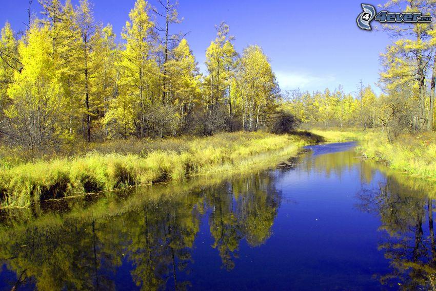 fiume nell' autunno, foglie gialle, acque di superficie, acqua