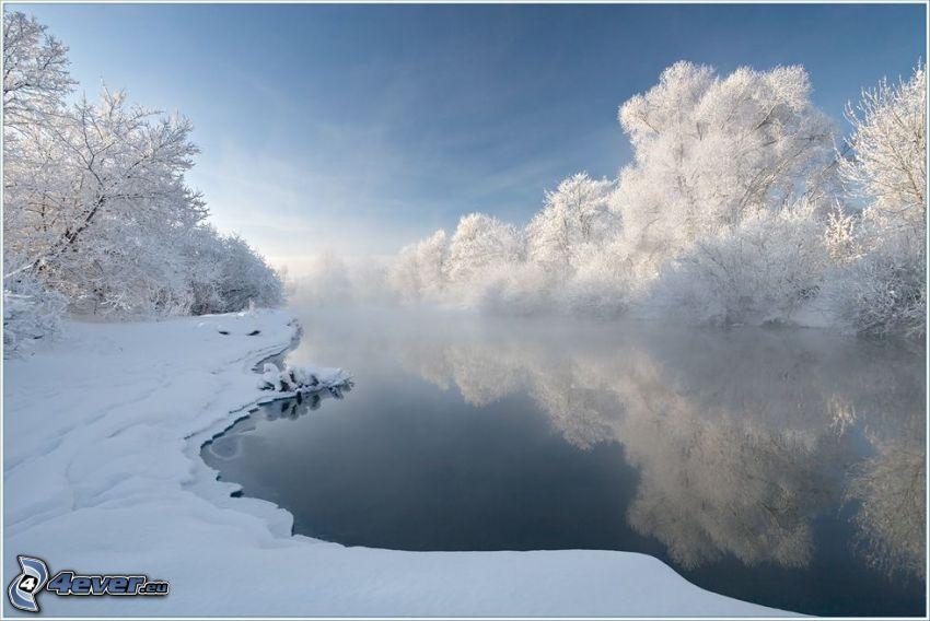 fiume nell'inverno, alberi congelati