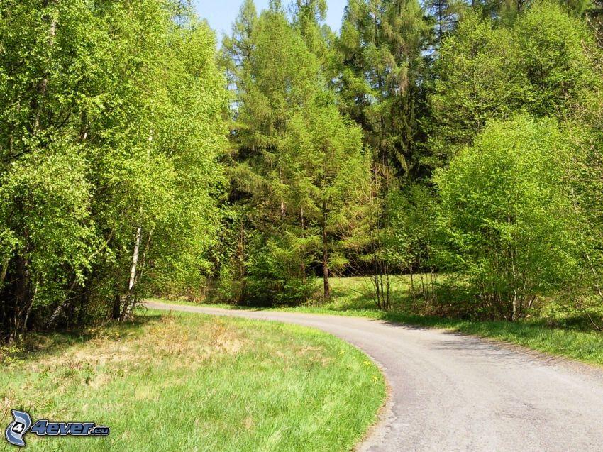 il percorso attraverso il bosco, curva, alberi frondiferi