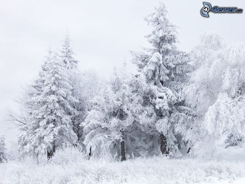 inverno, paesaggio
