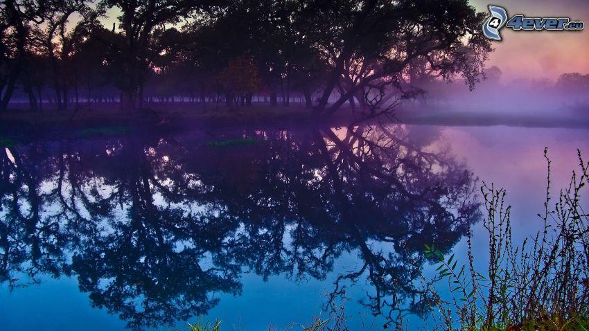 laghetto nella foresta, alberi, vapore, dopo il tramonto