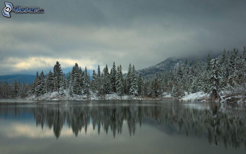 lago, nevosa foresta di conifere