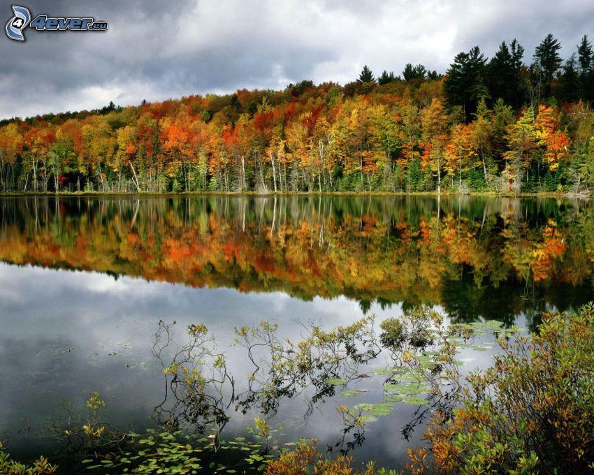 Lago nel bosco, alberi colorati, riflessione