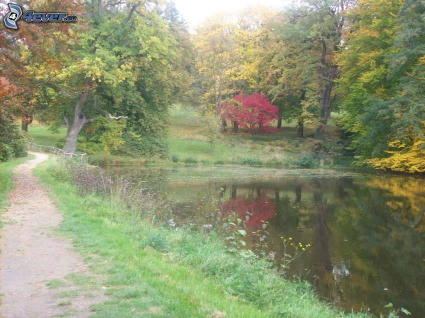 marciapiede, lago, parco, albero sopra un lago, autunno
