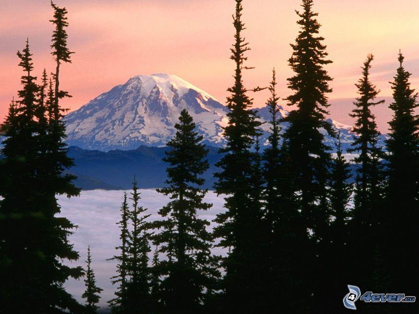 Mount Rainier, montagna innevata, alberi di conifere