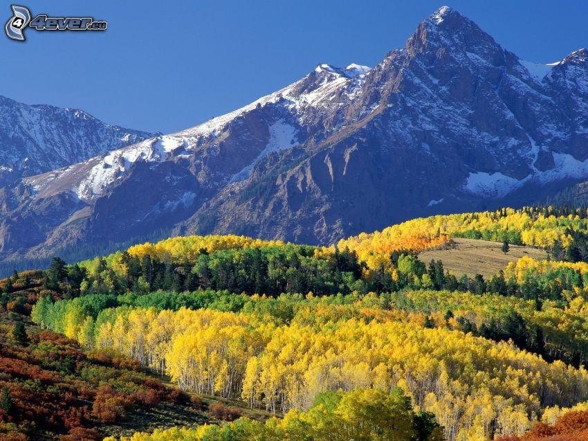 Mount Sneffels, Colorado, collina, alberi gialli, foresta