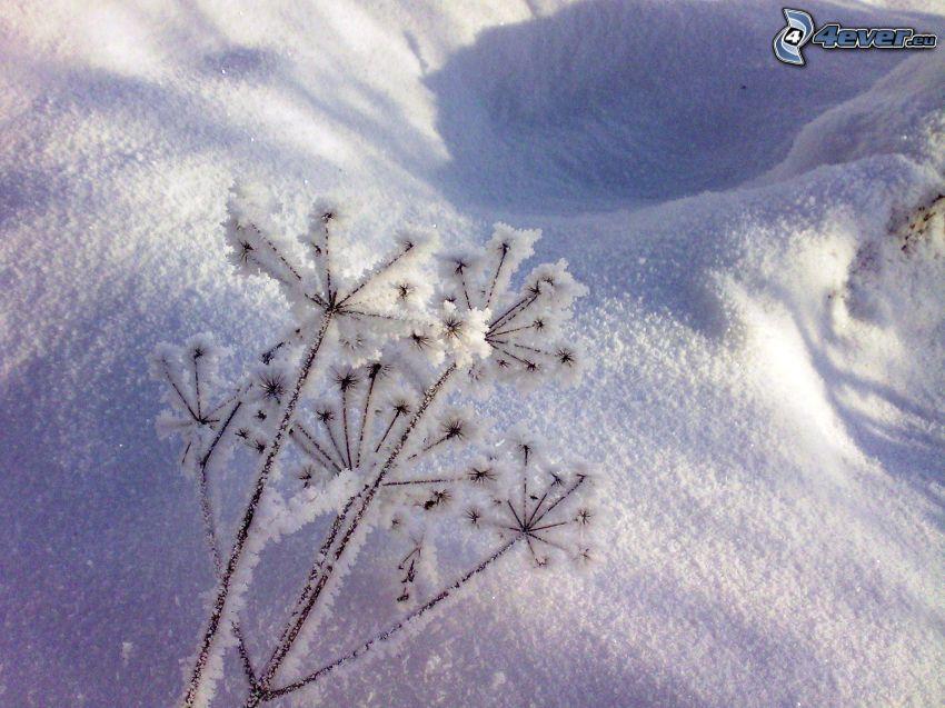 neve, fiocchi di neve, inverno