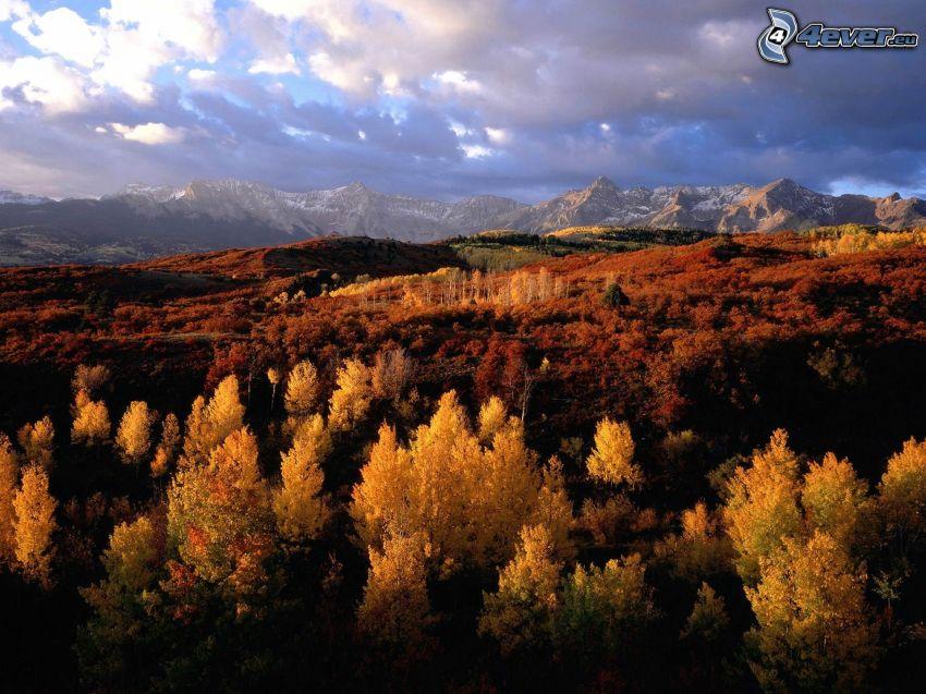 paesaggio d'autunno, bosco giallo d'autunno, colline nell'autunno