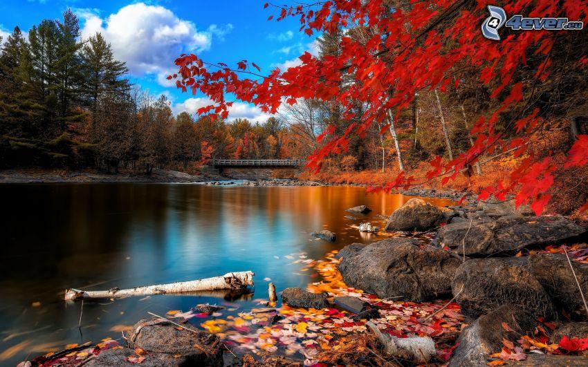 paesaggio d'autunno, foglie colorate, superficie d'acqua calma, ponte