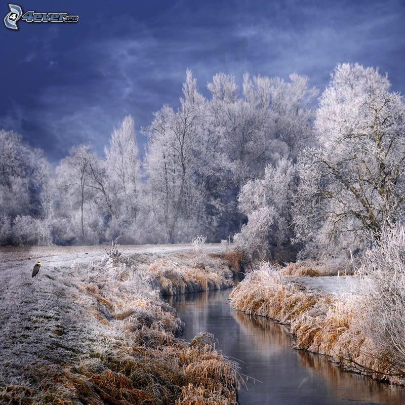 paesaggio ghiacciato, ruscello, foresta