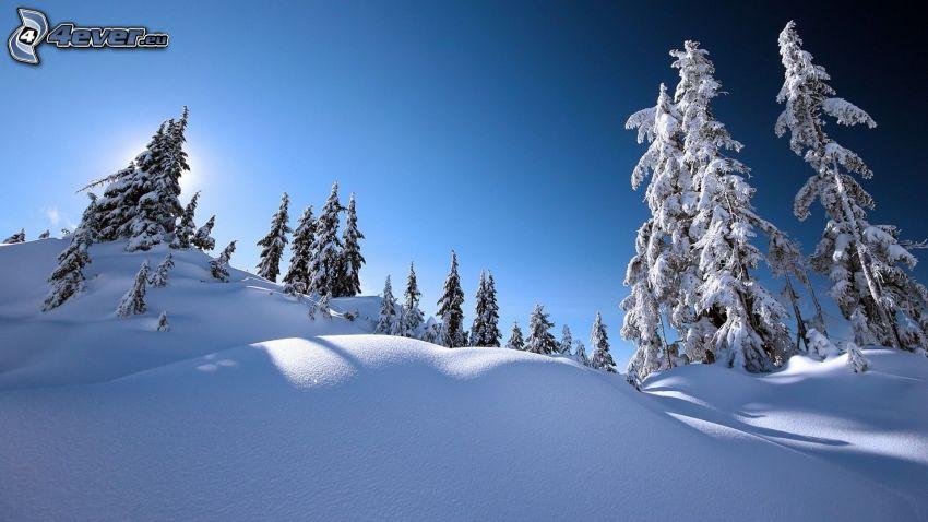 paesaggio innevato, alberi coperti di neve