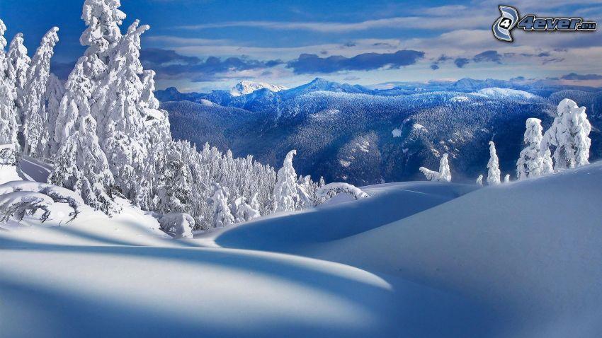 paesaggio innevato, neve