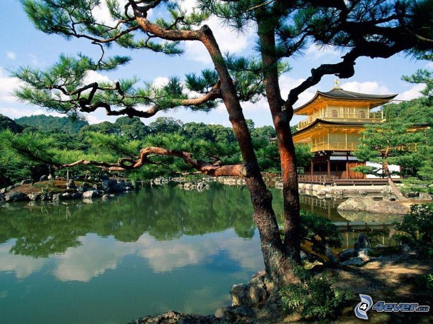 pagoda cinese, lago, conifera