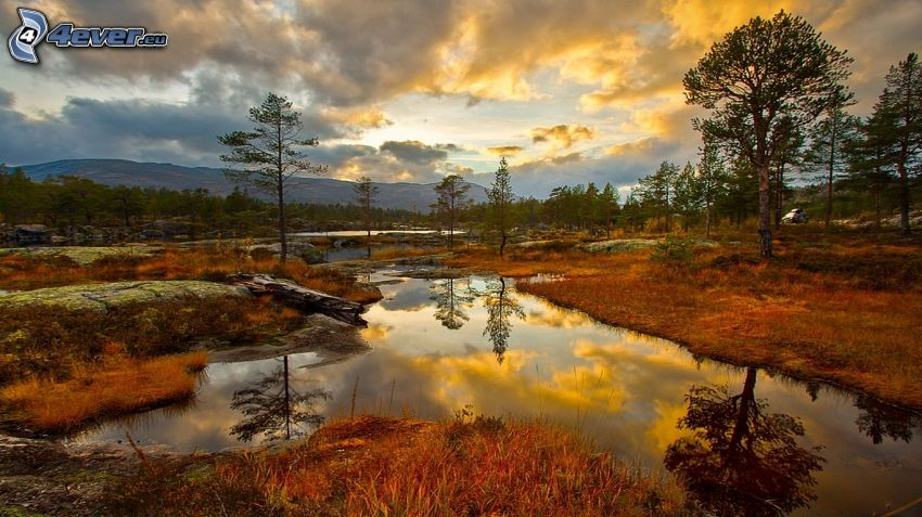 paludi, alberi, tramonto, riflessione