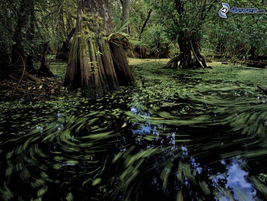paludi, mulinello d'acqua, foresta