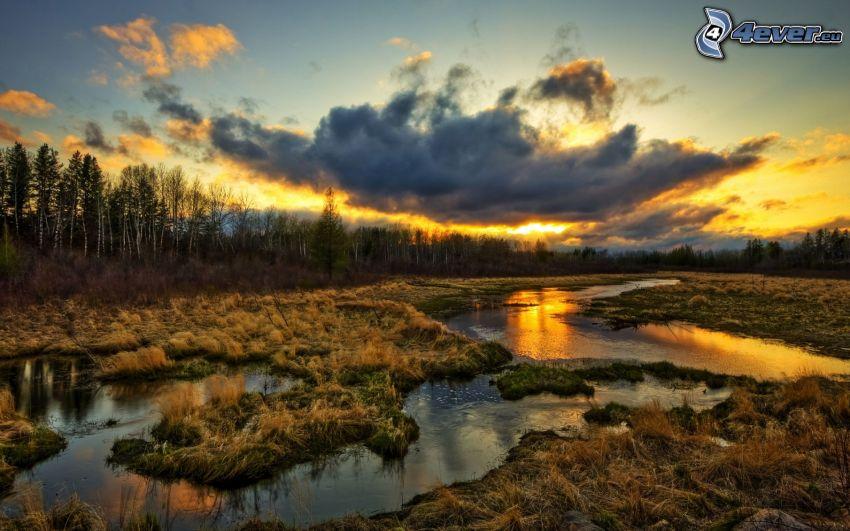 paludi, tramonto dietro il bosco, nuvole scure