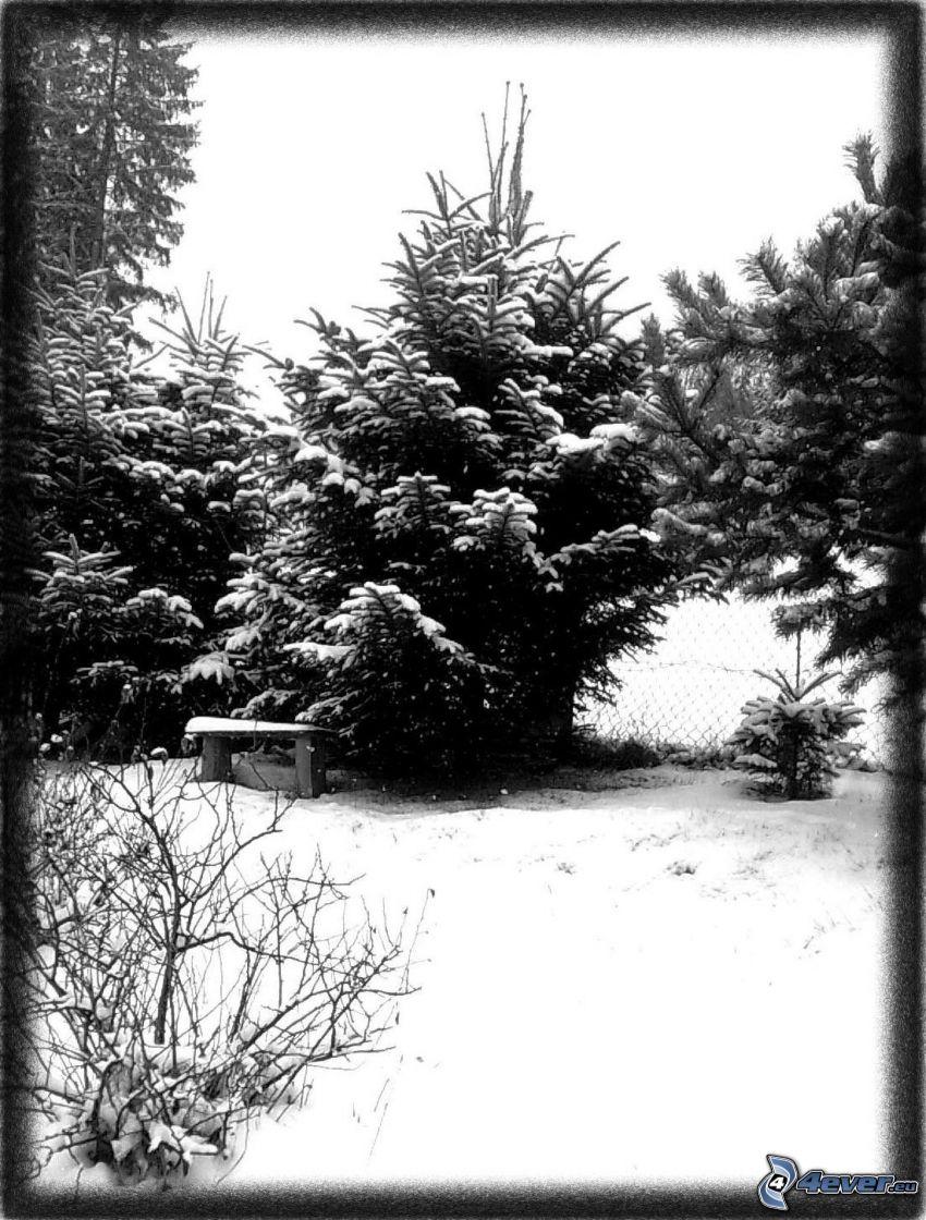 panchina sotto un albero, inverno, neve, alberi coperti di neve, alberi di conifere