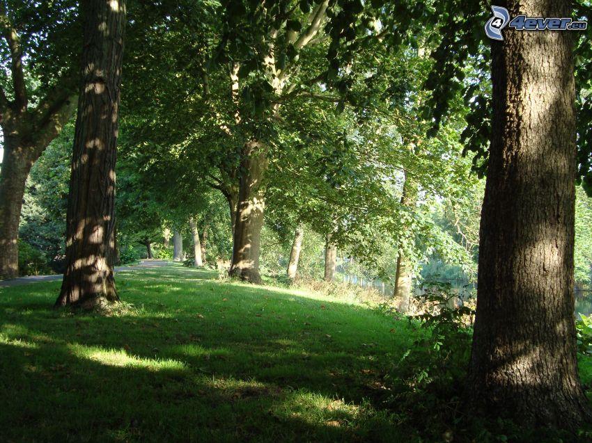parco, alberi, l'erba
