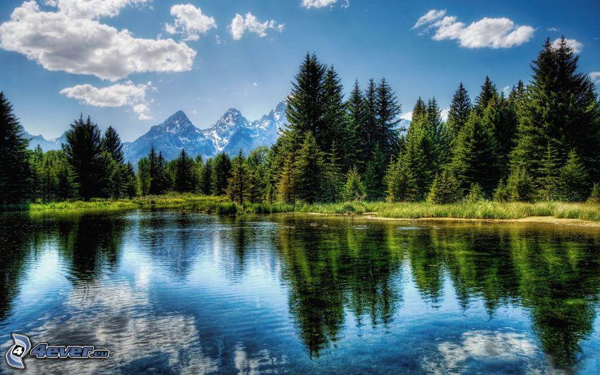 parco nazionale del Grand Teton, il fiume, bosco di conifere, montagne
