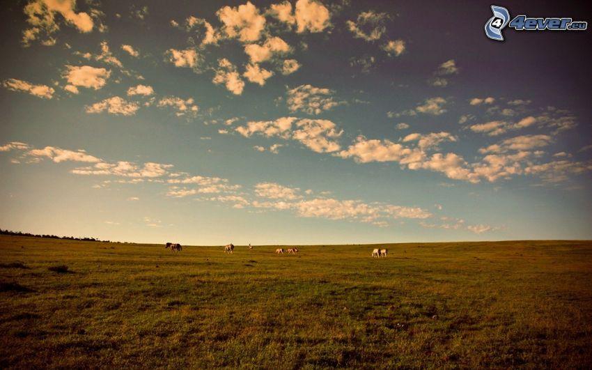 prato, cavalli, nuvole