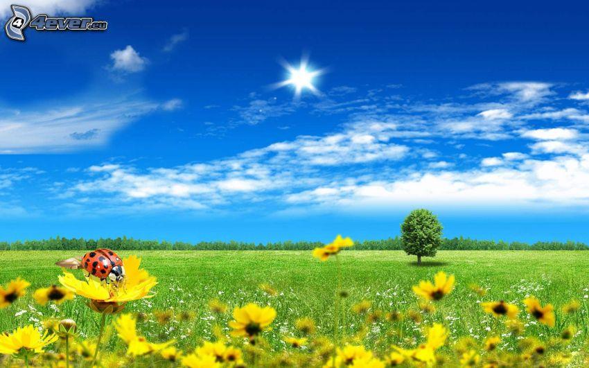 prato, fiori gialli, coccinella, albero solitario, sole, cielo