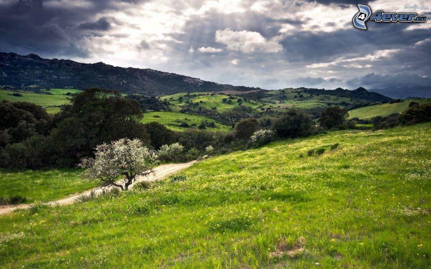 prato verde, albero fiorente, colline, raggi del sole