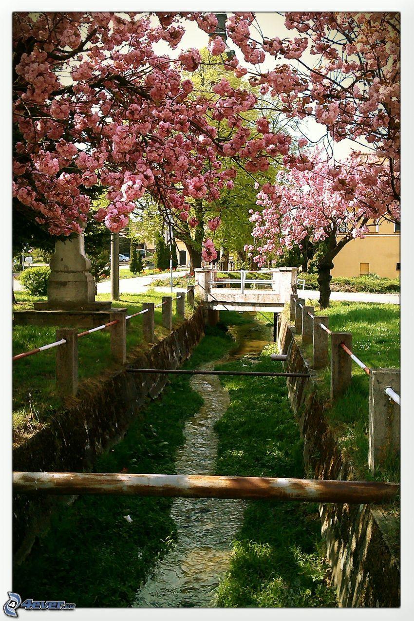 ruscello, alberi in fiore, l'erba