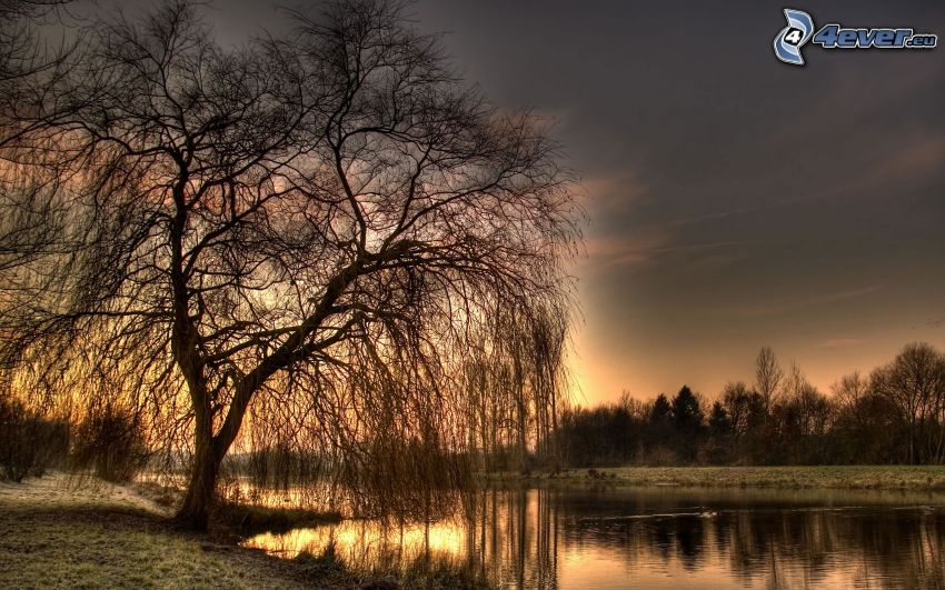 salice, albero sopra il fiume