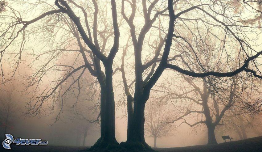 siluette di alberi, nebbia