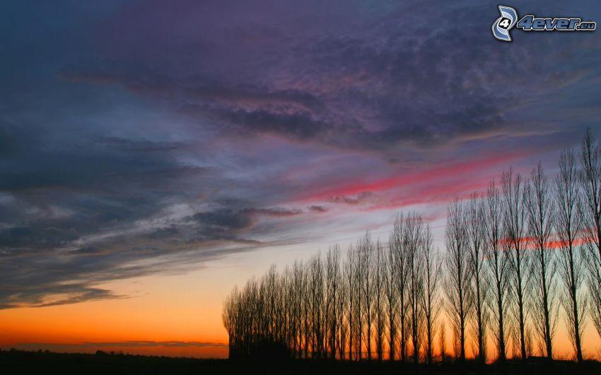 viale albero, dopo il tramonto, siluette di alberi