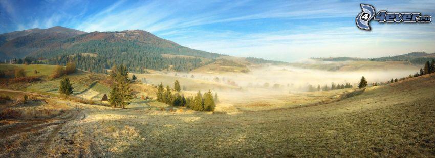 paesaggio, alberi di conifere, colline, nebbia a pochi centimetri dal terreno