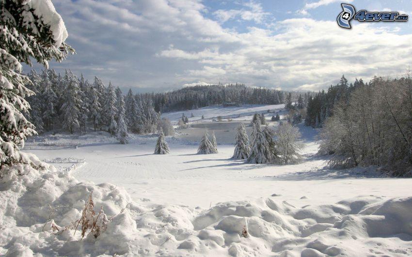 paesaggio innevato, bosco innevato, prato nevoso, nuvole