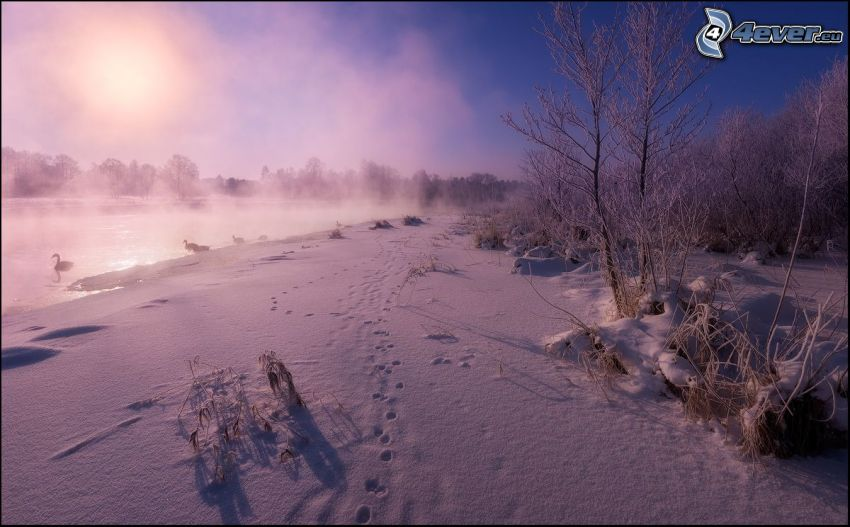 paesaggio innevato, tracce nella neve, lago, cigni