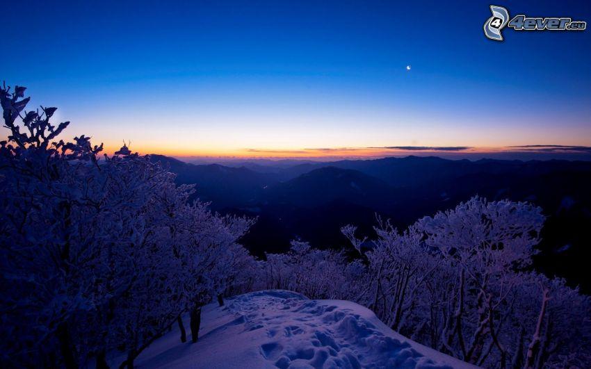 paesaggio invernale, montagne, alberi coperti di neve, neve
