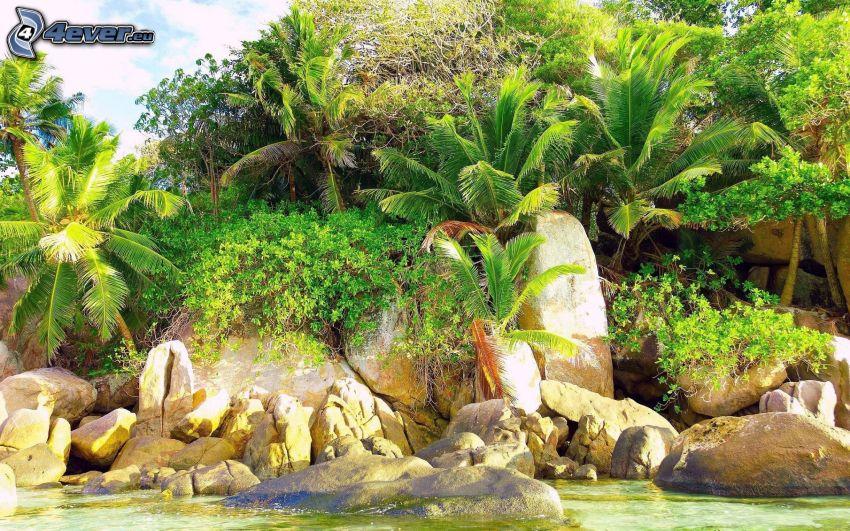 palme, verde, rocce, acqua