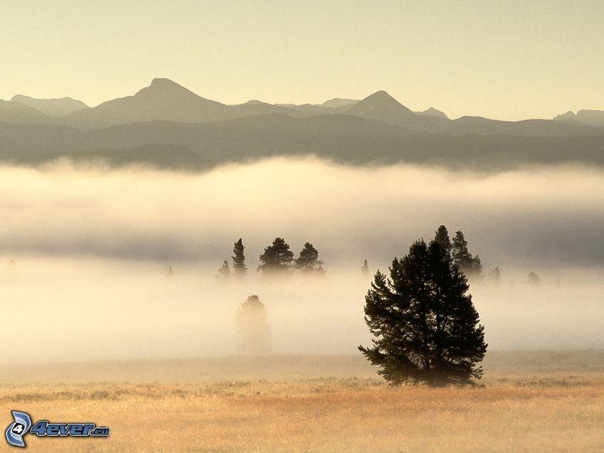 Parco nazionale di Yellowstone, montagne, inversione termica, alberi, nebbia a pochi centimetri dal terreno