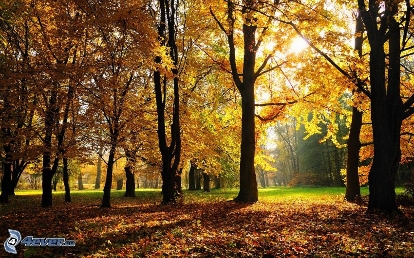 parco nell'autunno, alberi gialli
