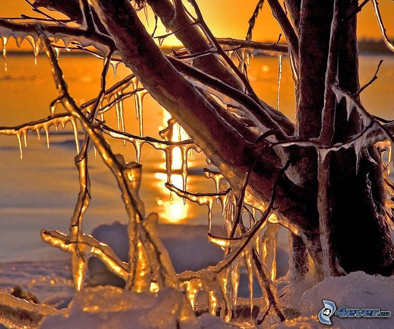 albero congelato, ghiaccio