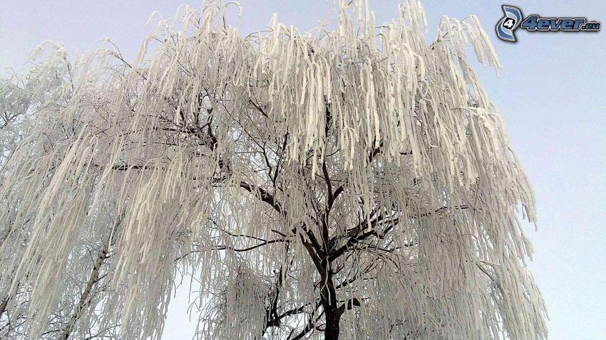 albero congelato, inverno