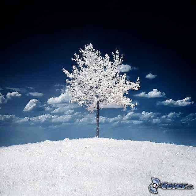 albero congelato, neve, inverno, albero solitario