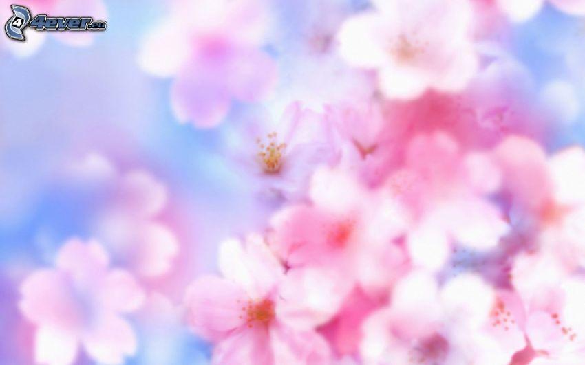 albero fiorente, fiori rossi