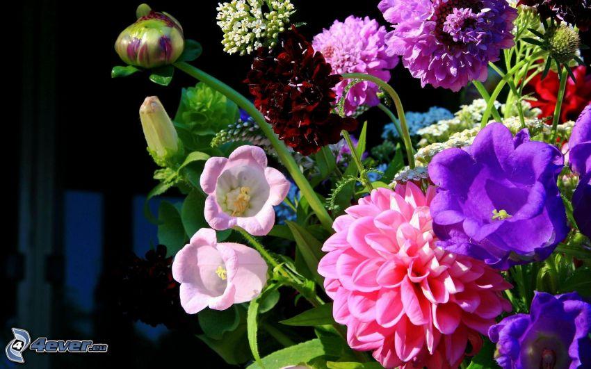 bouquet, fiori colorati
